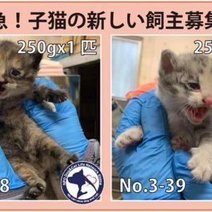 04/07期限!子猫2匹の新しい飼い主さん募集!!