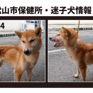 松山市保健所・迷子犬情報!*No.84雑種犬 福角町付近
