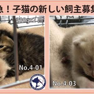 4/9期限!子猫3匹の新しい飼い主さん募集!!