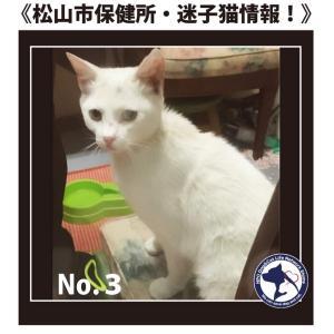 松山市保健所・迷子猫情報!*No.3 雑種猫 古三津付近にて