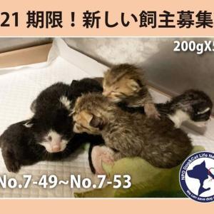 7/21期限!子猫の新しい飼い主さん募集!!