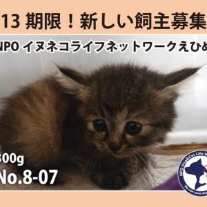 8/13期限!子猫の新しい飼い主さん募集!!