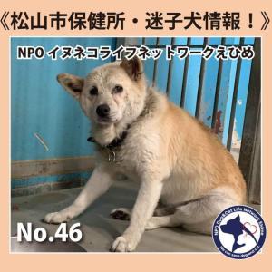 至急!No.46雑種犬 新しい飼い主さん募集!!