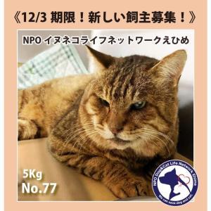 松山市保健所・迷子猫情報!No.77負傷猫キジトラ