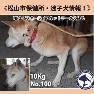 松山市保健所・迷子犬情報!No.100雑種犬