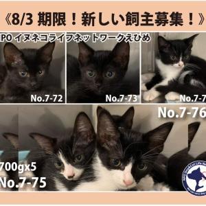 8/3期限!子猫No.7-72~76里親募集!