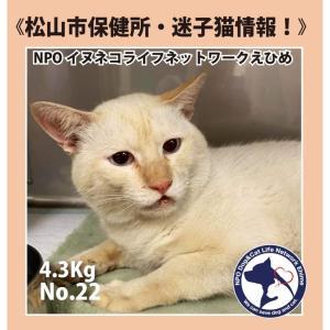 松山市保健所・迷子猫情報!No.22負傷猫 南高井町付近