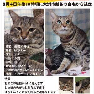 《大洲市高橋さんより》迷子猫をさがしています!
