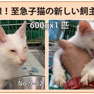 9/5期限!子猫の新しい飼い主さん募集!!