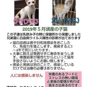 《ねこわんライクさんより》愛媛県より子猫の新しい飼い主さん募集!!