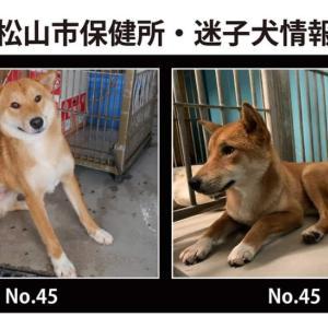 松山市保健所・迷子犬情報!*No.45雑種犬 菅沢町