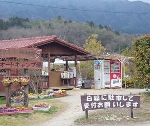 桜のお花見キャンプ