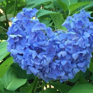 花とわん子と。