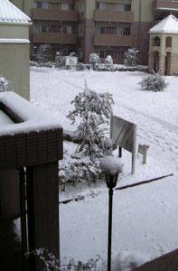 おお〜雪!!