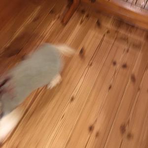 忠犬チビ公さん、逃げる