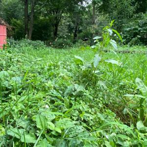 2週間振りのお山は草ぼんぼくちゃやった