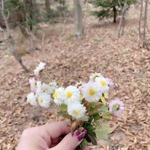 今年最後の庭の花
