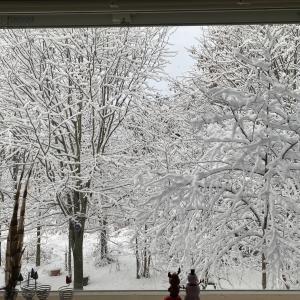 降った降った、雪降った