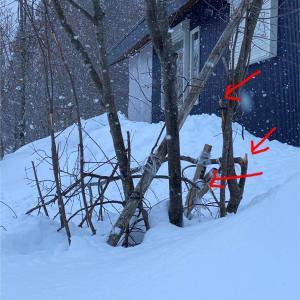 大事な大事な木が折れた