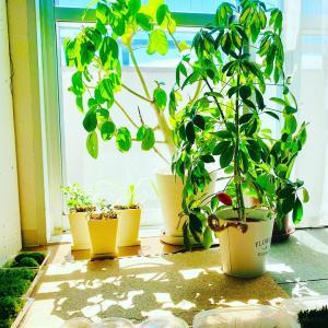 植物達のパワーが届きますように