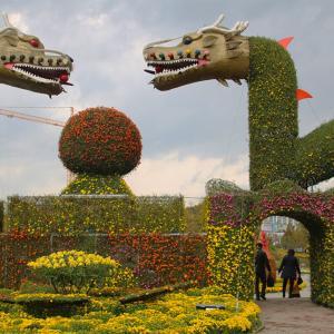 明日から開催!益山千万輪の菊祭り♪