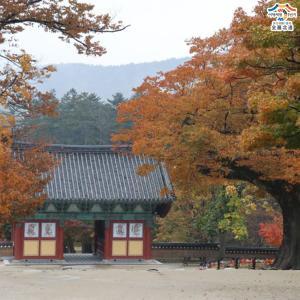 紅葉が美しい来蘇寺