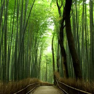 京都市の宿泊税いくら? を解決! 旅行・出張に使える計算ツール2つ