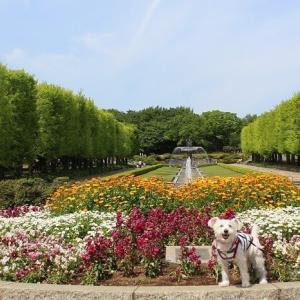 GWの昭和記念公園