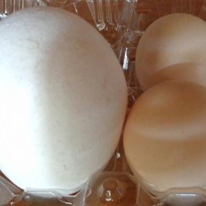 bigな卵