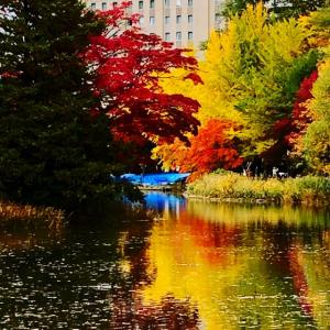 札幌のイヤシロチ中島公園(紅葉編)