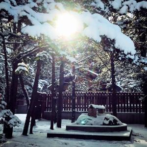 1月24日のメディスンカード~タートル