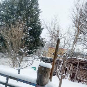 1/21 軽く吹雪模様な日〜外気温は高し