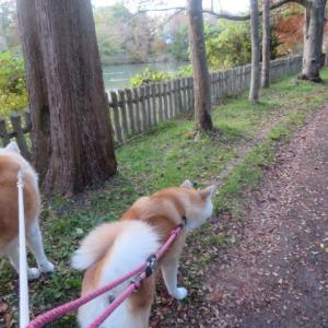 三連休最終日も散歩でした