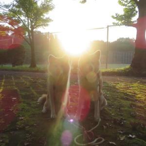秋分の日の朝散歩