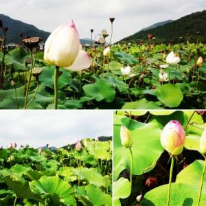 2020・8月の姫路♪「天晴水産せとの家」&ヤマサ蒲鉾「蓮の花苑」