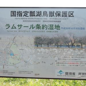 新潟県瓢湖①'21.7/21