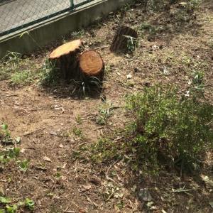 庭の木伐採終了