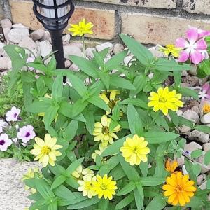 セリア「ガーデンフェンス」◆一年中、花いっぱいを目指して