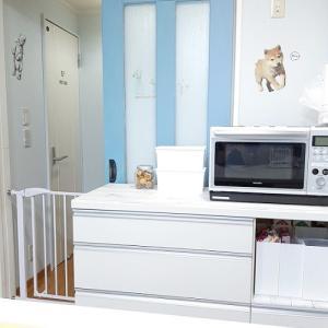キッチン収納◆セリアの新商品・スクエアBOXフタ付