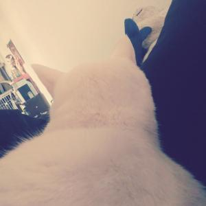 CATS2回目(吹き替え版)