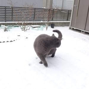 待望の雪!!!
