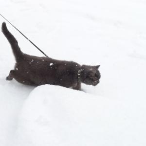 雪猫降臨☆