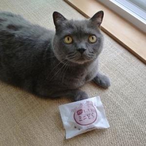 チェシャ猫疑惑