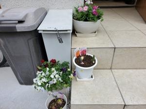 玄関前鉢植え