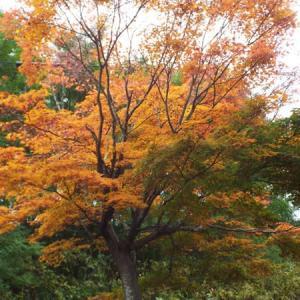 紅葉が鮮やかになりました