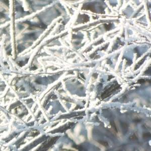氷点下20度以下の風景