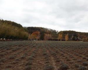 10月のファーム富田さんの風景