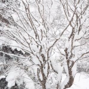 本格的な冬の突入です