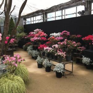 2021年2月 札幌・百合が原公園の温室内のお花たち