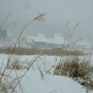 1月18日  御言葉をあなたへ   猛吹雪